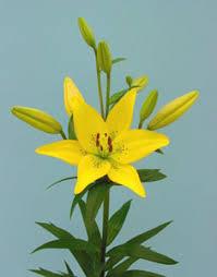 Glosario y propiedades mágicas de las plantas Images?q=tbn:ANd9GcR8XrXBD0p5Ui_4BDwviRke9z9f8Fb7-eatdi65JwFdHrAgNnNt