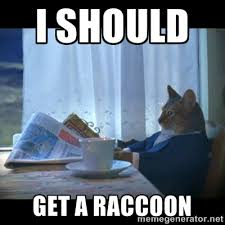 Meme Generator Raccoon - why derms say you should drink your wine and wear it too