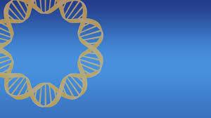 circle c australian shepherds canine degenerative myelopathy dm u2013 gensol diagnostics