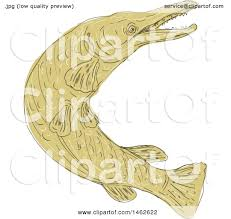 clipart of a swimming alligator gar fish in drawing sketch style