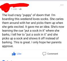 Fuck Buddy Meme - dog training one oh fuck it album on imgur