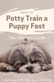 best 20 training your puppy ideas on pinterest puppy care