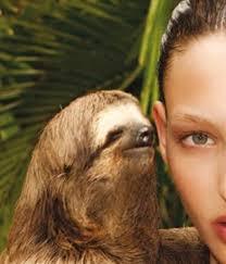Sloth Meme Rape - rape sloth image gallery know your meme