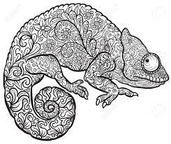 zentangle stylized multi coloured chameleon hand drawn reptile