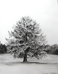 realistic tree drawing a tree exercise meggy90 on deviantart