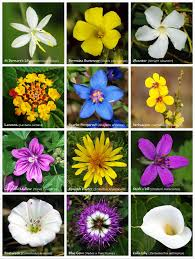 Pictures Of Flowers by Flower Wikipedia
