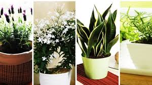 4 plants that you should have in your bedroom to sleep well youtube