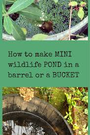 native pond plants uk how to make a mini wildlife pond the middle sized garden