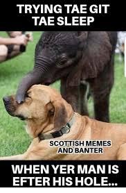 Scottish Meme - trying tae git tae sleep scottish memes and banter when yer man is