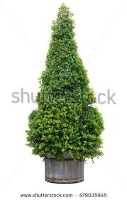 tree pot stock images royalty free images vectors