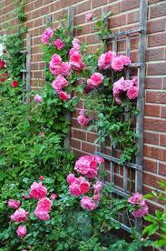 gardening ideas for the narrow garden between suburban homes