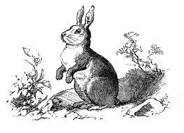 vintage rabbit vintage clip precious bunny engraving the graphics fairy