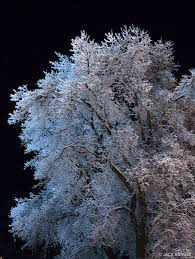 frosted tree at colorado mountain photography by brauer