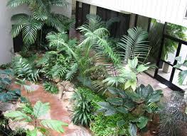 easy indoor plants glamorous illustration fake outdoor plants elegant little cactus