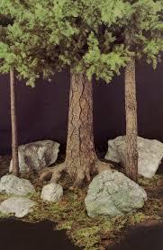forest trees barrango inc