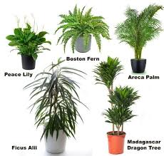 types of indoor plants 100 house plants best 25 tropical house