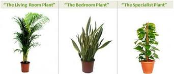 best bedroom plants hot tip the best plants for indoor air quality apartment therapy
