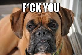 Meme Annoyed - fuck you dog do dah 18 pinterest quick meme dog memes and dog