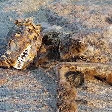 si e psa świnoujście iswinoujscie pl szokujące znalezisko na plaży woda