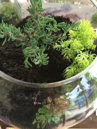 download terrarium gardens solidaria garden