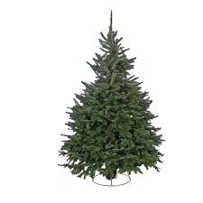 cut fraser fir real tree 6 7ft at homebase co uk