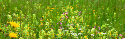the beautiful flowers and green grass pictures free loversiq