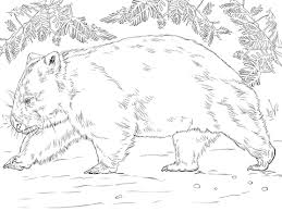 wombat bear coloring free printable coloring pages