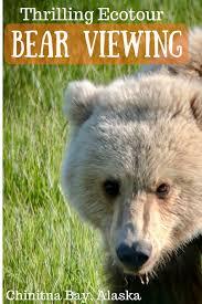 Alaska wildlife tours images Alaska brown bear viewing ecotour chinitna bay wandering chocobo png