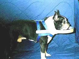 Halo For Blind Dogs Rtside Jpg