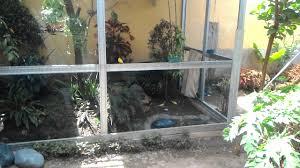 backyard aviary youtube