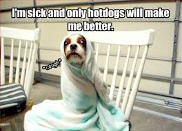 Funny Sick Memes - sick dog funny pictures quotes memes funny images funny jokes