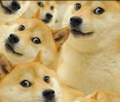 Doge Know Your Meme - know your meme doge your best of the funny meme