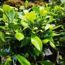 best 25 wholesale plants ideas on wedding succulent