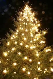 dazzling lights for christmas tree beautiful decoration the brief