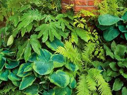 Summer Garden Ideas - shade garden ideas hgtv