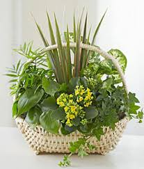 funeral plants european dish garden at from you flowers