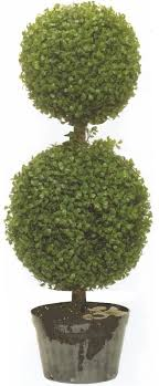 outdoor boxwood balls outdoor trees ficus trees wine palm