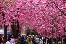 china s southernmost city to plant 500 000 trees society