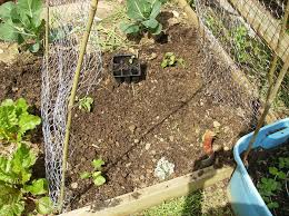 introduction how to build a low cost vegetable garden trellis