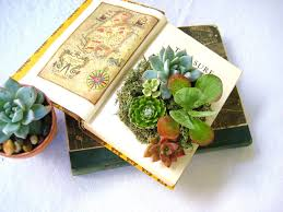 succelents 12 must have succulent books sublime succulents