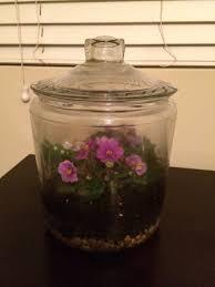 african violet closed terrarium aquariacentral com