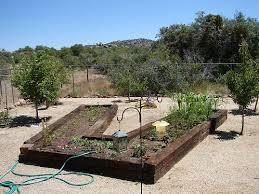 arizona raised bed vegetable u0026 fruit tree gardens arizona
