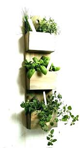 plant wall hangers indoor wall mounted plants wolflab co