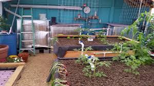 backyard aquaponics bug control organic farming aphids and