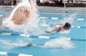 Competitive Swimming Memes - what swim workouts prove about the way we can work together better