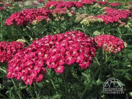Summer Flower Garden Ideas - 271 best garden perennials u0026 bushes images on pinterest flower