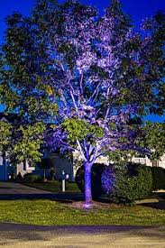 Colored Led Landscape Lighting Led Outdoor And Landscape Lighting Tree Uplighting Color