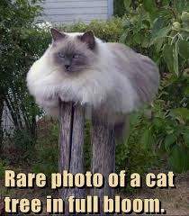 cat tree in bloom cat jokes pictures jokes4laugh tridanim