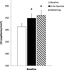 increased skeletal muscle capillarization independently enhances