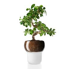 pots awesome pot ideas self watering flower pot house pot orchid
